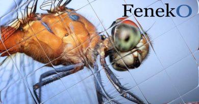 Feneko | rolhorplissé