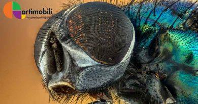 Artimobili | Insectenbescherming